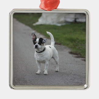 Terrier Dog looking Cute! Silver-Colored Square Decoration
