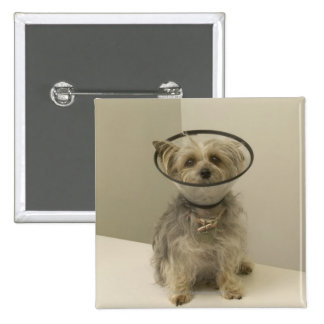 Terrier dog wearing protective collar, close-up 15 cm square badge