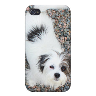 Terrier iPhone 4/4S Covers