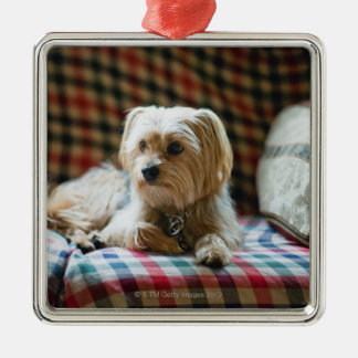 Terrier lying on checkered blanket christmas ornament