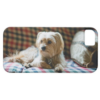 Terrier lying on checkered blanket iPhone 5 covers
