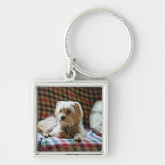 Terrier lying on checkered blanket key ring