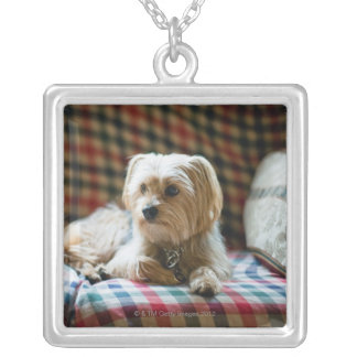 Terrier lying on checkered blanket silver plated necklace