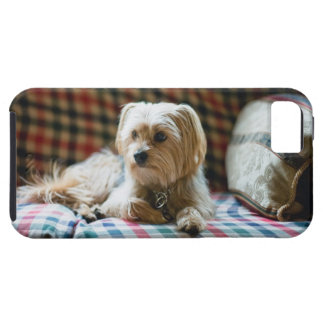 Terrier lying on checkered blanket tough iPhone 5 case