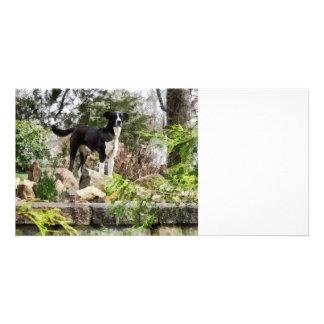 Terrier Standing Guard Custom Photo Card