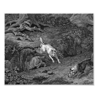Terriers Black & White Dog Art Art Photo