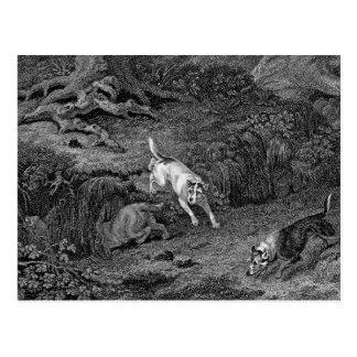 Terriers Black & White Dog Art Postcard