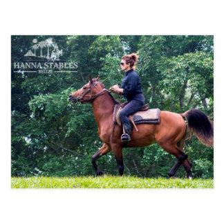 Terry Horseback Riding at Hanna Stables Belize Postcard