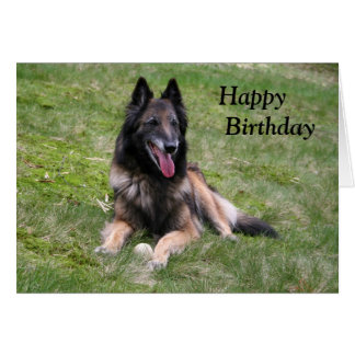 Tervuren Belgian Shepherd dog photo birthday card