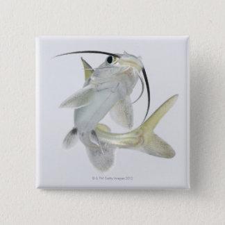 Tete sea catfish (Hexanematichthys seemanni) 15 Cm Square Badge