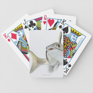 Tete sea catfish (Hexanematichthys seemanni) 2 Bicycle Playing Cards