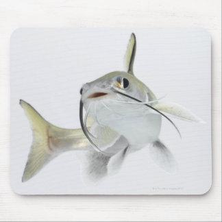 Tete sea catfish (Hexanematichthys seemanni) 2 Mouse Mat