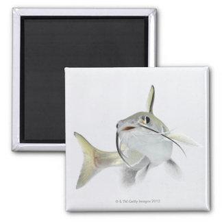 Tete sea catfish (Hexanematichthys seemanni) 2 Square Magnet