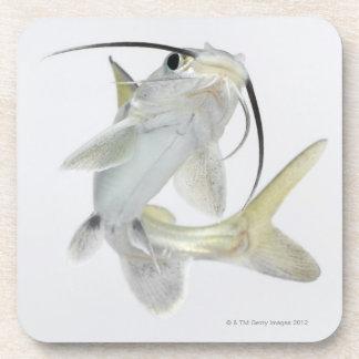 Tete sea catfish (Hexanematichthys seemanni) Drink Coasters