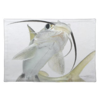 Tete sea catfish (Hexanematichthys seemanni) Placemat