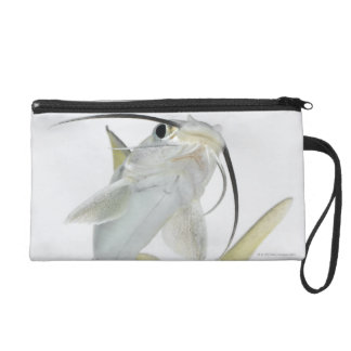 Tete sea catfish (Hexanematichthys seemanni) Wristlet