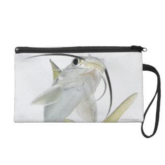 Tete sea catfish (Hexanematichthys seemanni) Wristlet Clutch