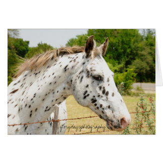 Texas Appaloosa Card