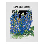 Texas Blue Bonnet Seed Packet Label Poster