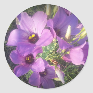 Texas Bluebells Classic Round Sticker