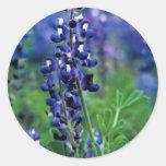 Texas Bluebonnet Classic Round Sticker