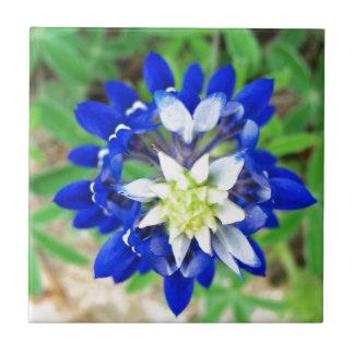 Texas Bluebonnet Top View Tile