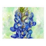 Texas Bluebonnet Wildflower Drawing Postcard