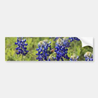Texas Bluebonnets Bumper Sticker