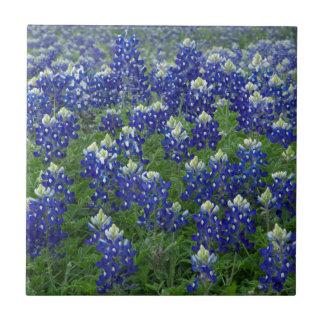 Texas Bluebonnets Field Photo Tile