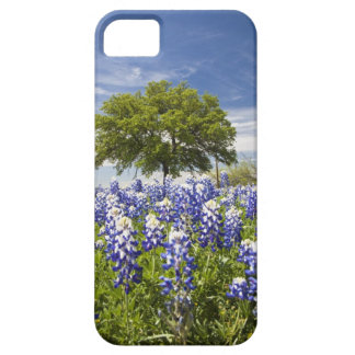 Texas bluebonnets(lupinus texensis) and oak iPhone 5 cases