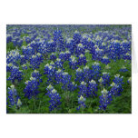 Texas Bluebonnets Photo Blank Stationery Note Card