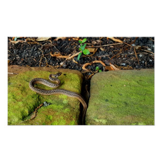 Texas brown snake poster