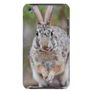 Texas cottontail rabbit iPod Case-Mate case