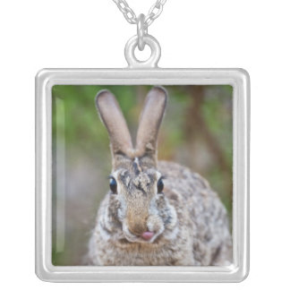 Texas cottontail rabbit silver plated necklace
