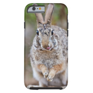 Texas cottontail rabbit tough iPhone 6 case