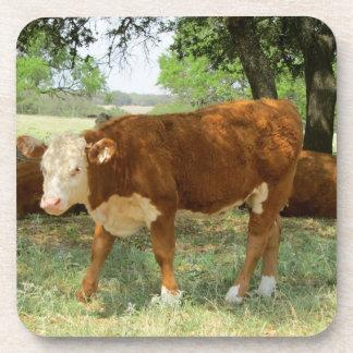 Texas Cow Beverage Coasters