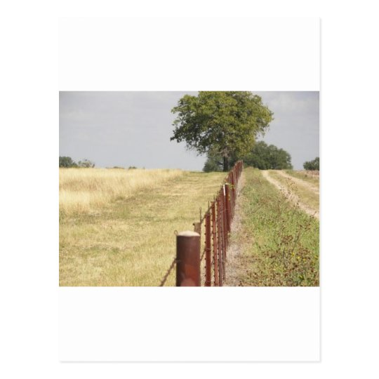 Texas Fence Line Postcard