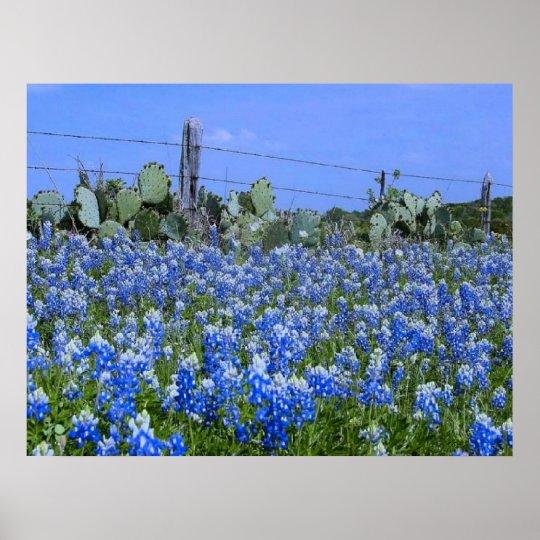 Texas Hill Country Bluebonnets/Cactus Art Print