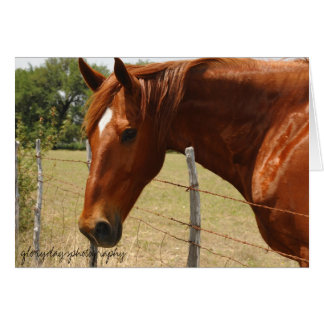 Texas Hill Country Horse Card