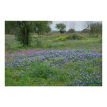 Texas Hill Country Print