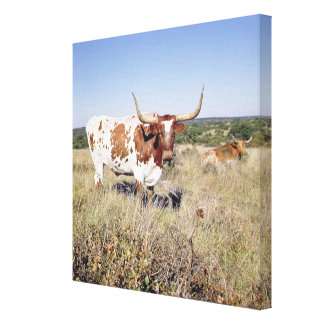 Texas Longhorn Breed (photo) Canvas Print