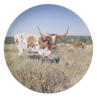 Texas Longhorn Breed (photo) Dinner Plates