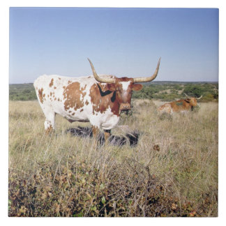 Texas Longhorn Breed (photo) Large Square Tile