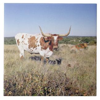 Texas Longhorn Breed (photo) Tile