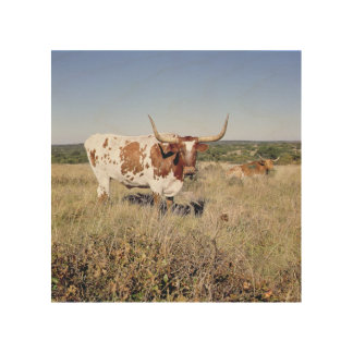 Texas Longhorn Breed (photo) Wood Wall Art