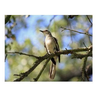 Texas State Bird Post Card