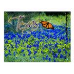 Texas State Flower - Bluebonnets Postcard