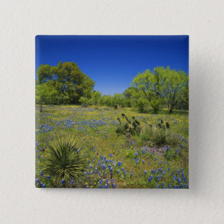 Texas, Texas Hill Country, Low bladderpod, 15 Cm Square Badge
