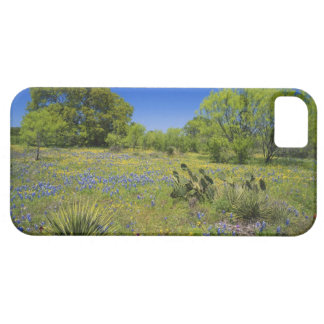 Texas, Texas Hill Country, Low bladderpod, iPhone 5 Cover