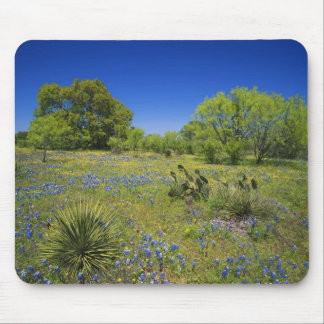 Texas, Texas Hill Country, Low bladderpod, Mouse Mat